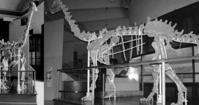 Investigadores argentinos hallan fósil de dinosaurio de 85 millones de años.