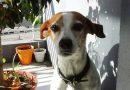 Cuarentena Obligatoria: Aseguran que las mascotas incrementan su ansiedad al modificarse sus rutinas