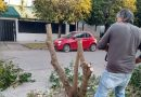 En Funes, un hombre taló un árbol y amenazó con su motosierra a los inspectores que lo multaron