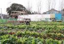 """Rosario, el """"único municipio del país"""" que trabaja la agricultura urbana como política pública"""