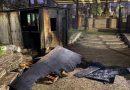 Bomberos sofocaron un incendio en el Rosedal del Parque Independencia