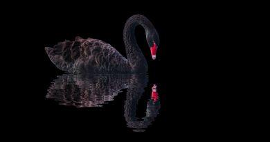 "La grieta: ""Un cisne negro al que se teme"""
