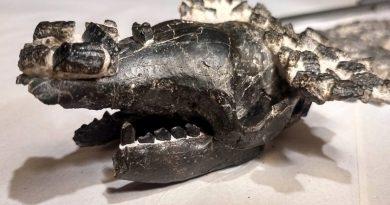 San Pedro: Presentaron los restos fósiles del quirquincho más grande que se conoce