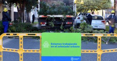 Arbolado: el plan de poda municipal alcanzará a 40.000 ejemplares en toda la ciudad