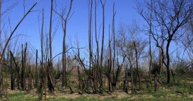 """Alertan sobre la """"pérdida de fertilidad"""" en suelos afectados por incendios en humedales."""