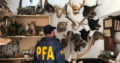 Secuestraron 55 animales embalsamados e investigan una red ilegal