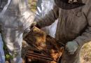 La provincia de Santa Fe brinda capacitaciones para formar nuevos operarios apícolas